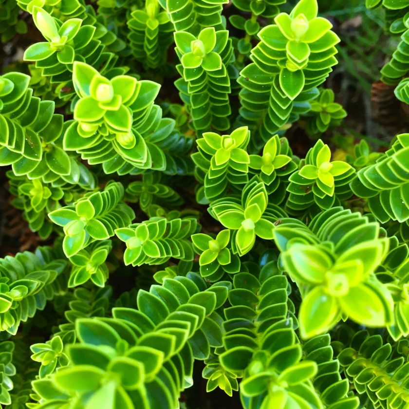 glowing green plants