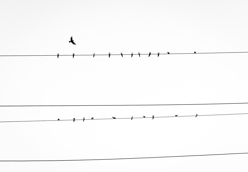birds, electric line