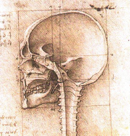 https://www.wikiart.org/en/leonardo-da-vinci/view-of-a-skull-1